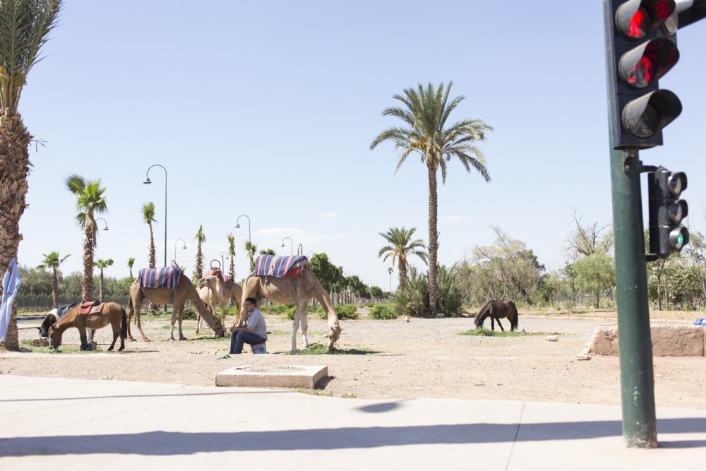 marrakesh177_blog
