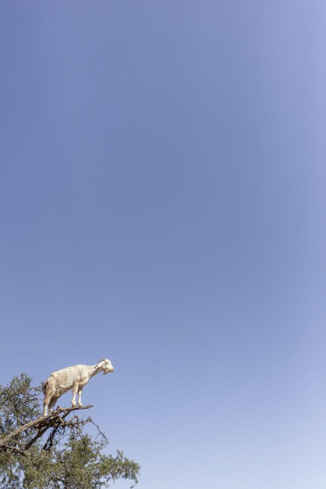 marrakesh281_blog