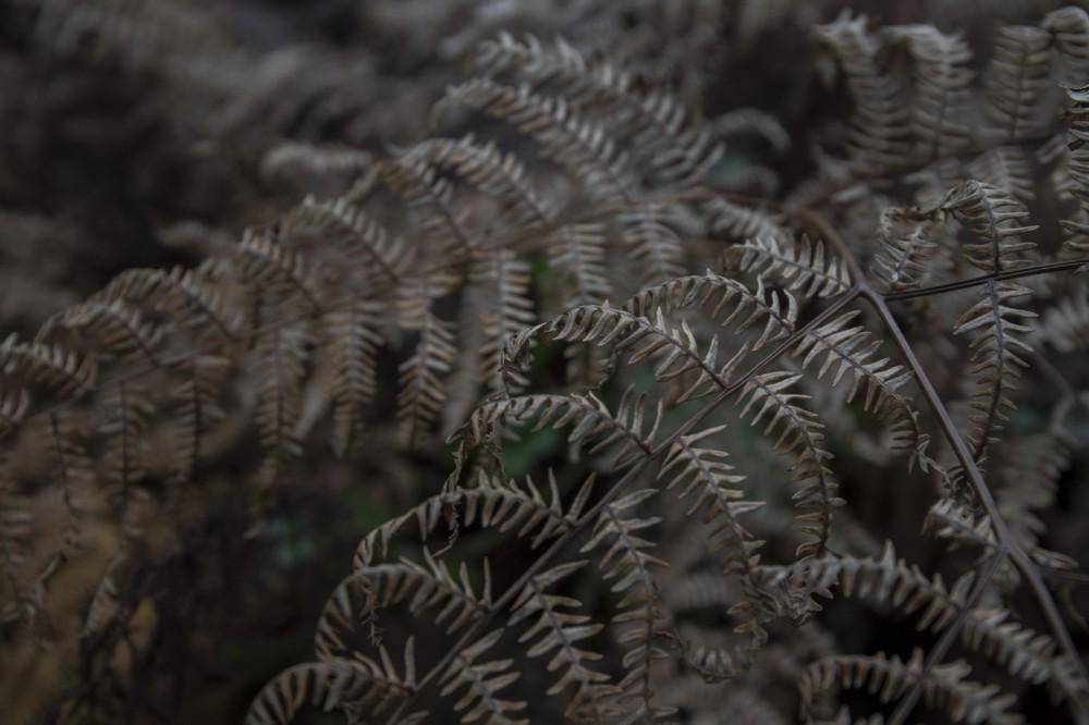 glaswaldsee15_037