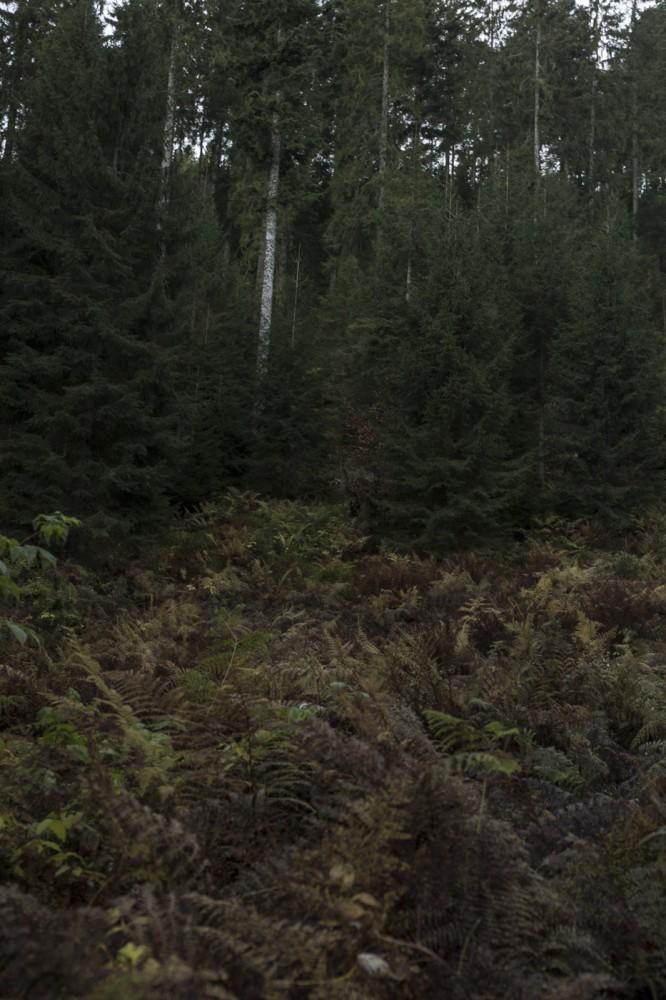 glaswaldsee15_038