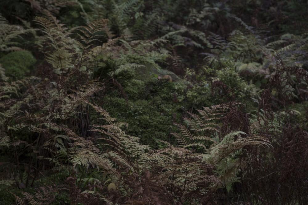 glaswaldsee15_039