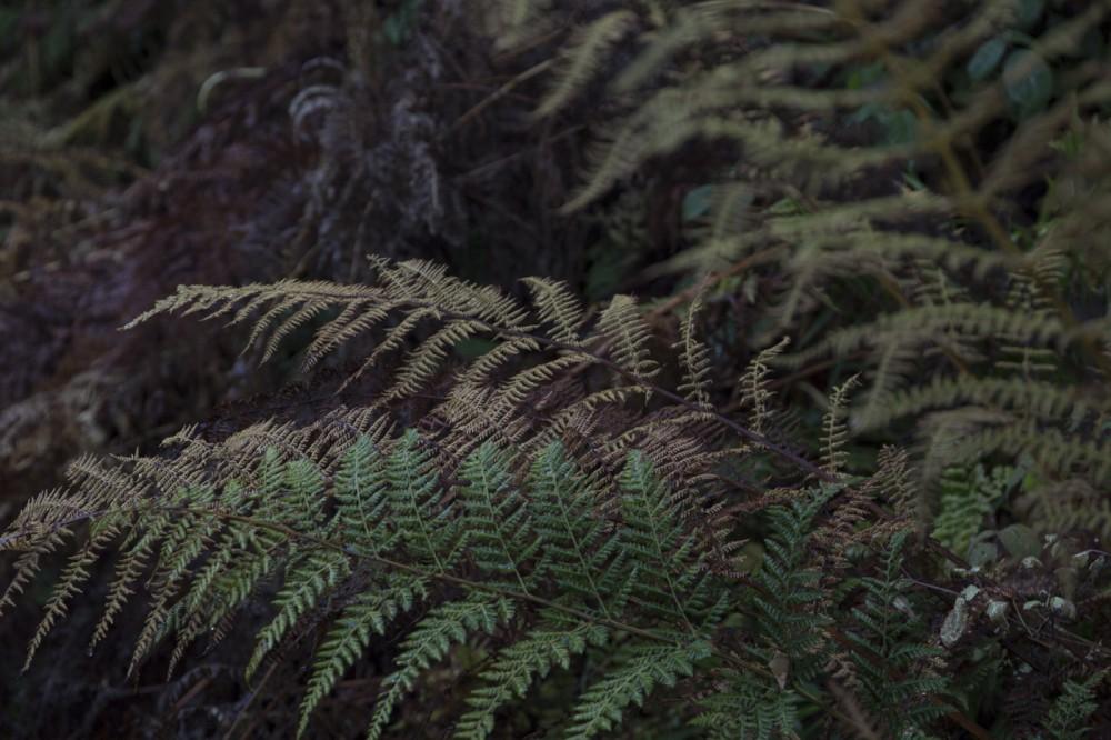 glaswaldsee15_040