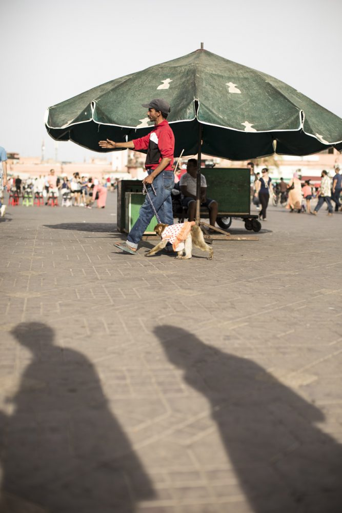 marrakech2219_blog